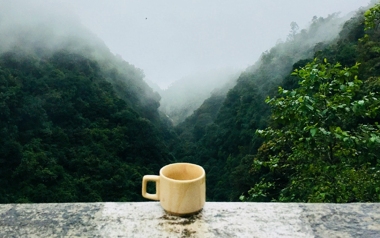 he shou wu, tea, cup, nature