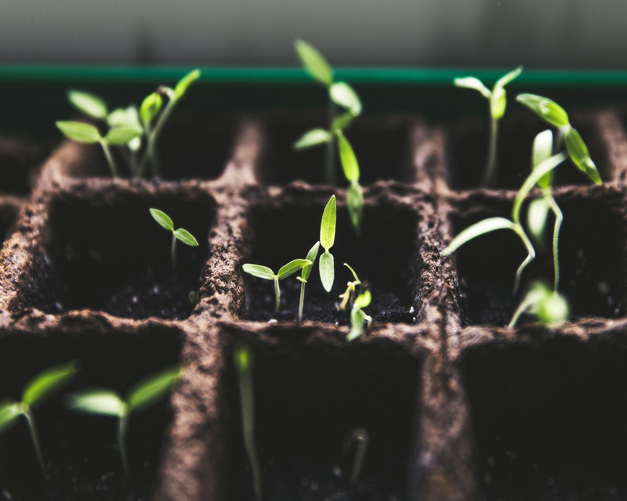 Types of Sprouts & How to Grow Them: The Ultimate Guide